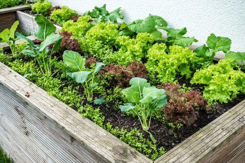 Hochbeet Im Herbst Bepflanzen Dieses Gemuse Konnen Sie Bis In Den Winter Ge In 2020 Vertical Vegetable Gardens Indoor Vegetable Gardening Winter Vegetables Gardening