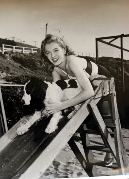Marilyn Monroe spaniel