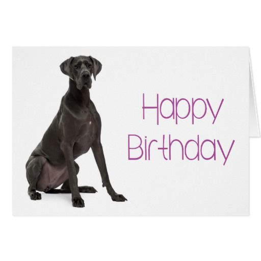 Image Result For Black Great Dane Birthday Wishes Birthday