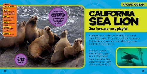 National Geographic Little Kids First Big Book Of The Ocean National Geographic Little Kids First Big Books Big Book Sea Lion Ocean