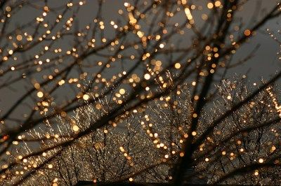 Lights in branches with flowers falling from ceiling