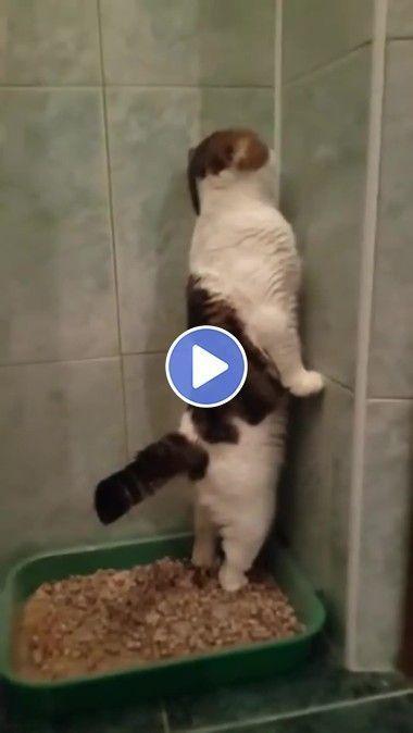 8 Most Viral Cat Videos On The Web Kittens Em 2020 Caes E Gatos Engracados Videos Engracados De Gato Gatos Loucos