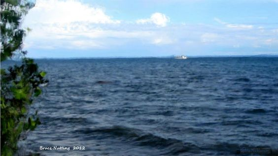 Sylvia's Ocean