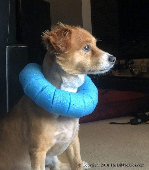 Elizabethan Safety Collar Or Dog Cone Alternatives Dog Cone