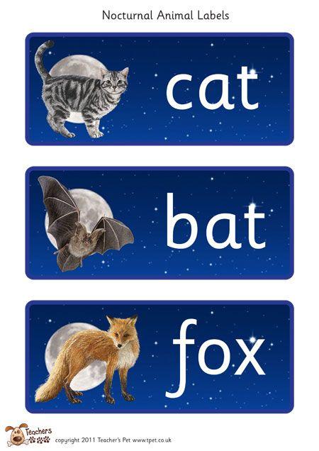 Teacher's Pet - Nocturnal Animal Labels - FREE Classroom Display Resource - EYFS, KS1, KS2, day, night, nocturnal, wildlife, animals