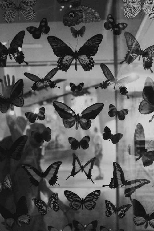 Butterflies In Black And White Black And White Photo Wall Black Aesthetic Wallpaper Black And White Aesthetic