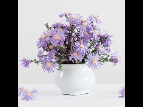 Aster Flower Of The Month Series Acrylic Painting Live Tutorial Youtube Painting Flowers Tutorial Acrylic Painting Flowers Painting Tutorial