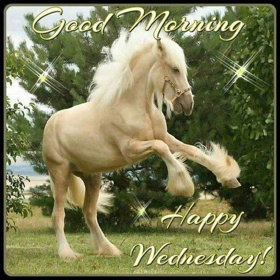 Good Morning, Happy Wednesday good morning wednesday wednesday quotes good morning quotes happy wednesday good morning wednesday quotes wednesday image quotes happy wednesday morning wednesday morning facebook quotes happy wednesday good morning: