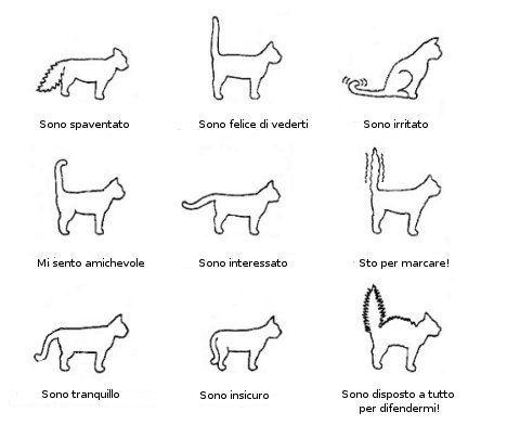 IL Gatto | Il gatto: indicazioni per capire il comportamento del corpo.