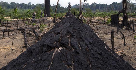 Alertas de desmatamento e degradação da Floresta Amazônica aumentam 35% | #Amazônia, #Degradação, #Desmatamento, #Floresta, #IBAMA, #MeioAmbiente