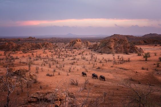 """DECEMBER 18, 2016. In Search of Greener Pastures  By Jetje Japhet.  As the sun sets over the African nation of Zimbabwe, a herd of elephants journeys over the plains near the Limpopo River. Venturing across this """"soft but harsh and beautiful and endless"""" landscape, as described by Jetje Japhet, the elephants were likely in search of food or water. """"I was lucky to be there"""" to capture this image, Japhet writes."""