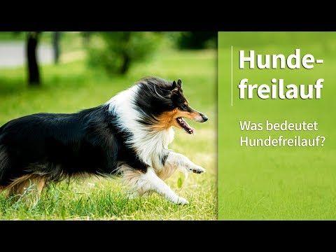 Hundefreilauf Was Bedeutet Hundefreilauf Steffis Meinung Dazu Youtube Hunde Hundeleine Freilauf