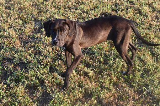 Panama City Fl Pointer Meet Kona A Pet For Adoption Animal Shelter Fundraiser Pet Adoption Animals