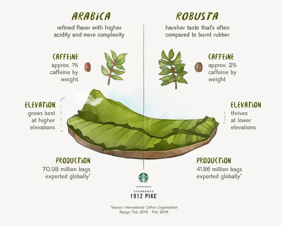 Arabica Coffee vs. Robusta Coffee | 1912 Pike COFFEE : More at FOSTERGINGER @ Pinterest