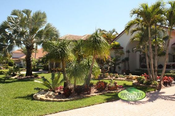 Tropical Front Yard Landscaping Ideas with Palm Trees : Backyard Palm