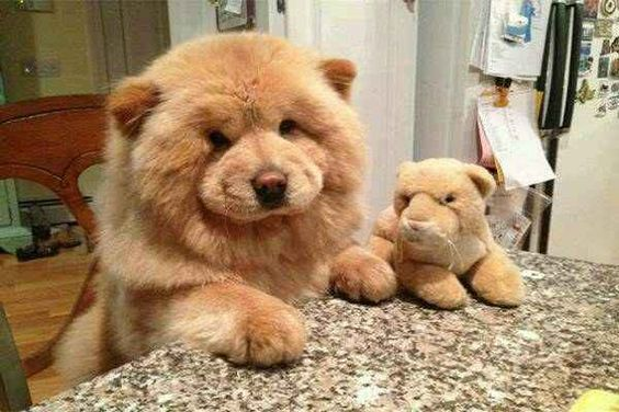 24 Of The Fluffiest Animals In The World