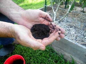 Coffee Grounds in Your Garden