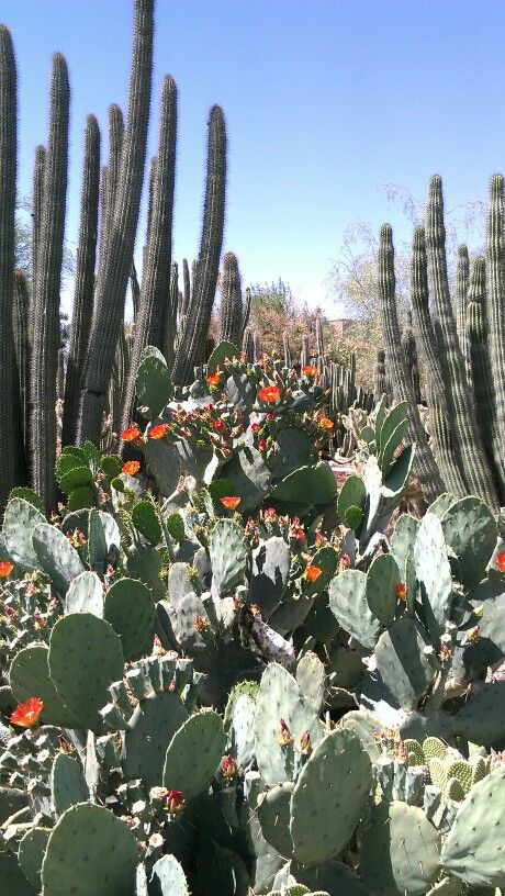 Desert Botanical Garden Phoenix, Arizona: