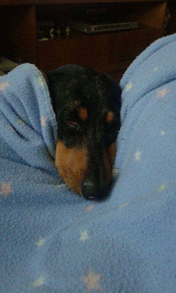 Muuuuito sono... #teckellovers#soneca