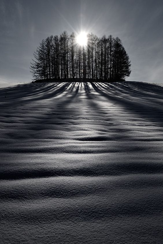 The sun and shadows B&W - The wonderful scenery of Hokkaido during winter is made by hills, trees, snow, the sun and shadows. Moreover, you can see footprints, such as the north fox, a deer, and a rabbit.     Biei,Hokkaido,Japan.