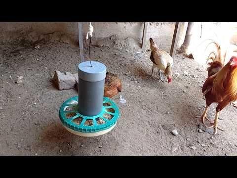 Como Hacer Un Comedero Casero Para Pollos O Gallinas Youtube Comederos De Pollo Comederos Para Aves Comedero Para Gallinas