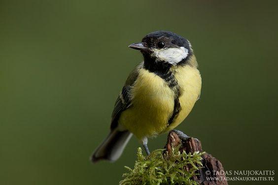 Bird Photography Near Feeders