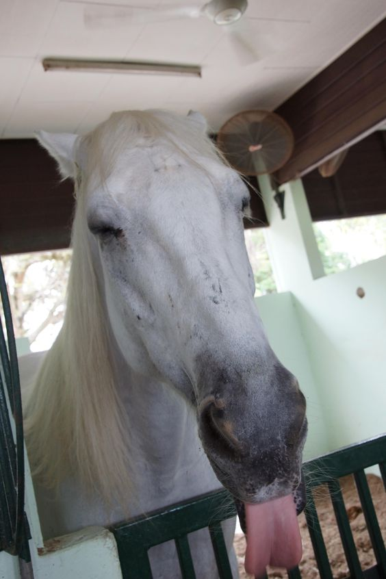 Animal #Horse #Ipoh Turf Club #Perak, MY