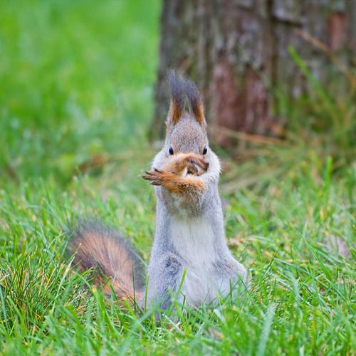 A squirrel appears to be practicing Tai Chi or Kung-Fu in a park in Moscow.
