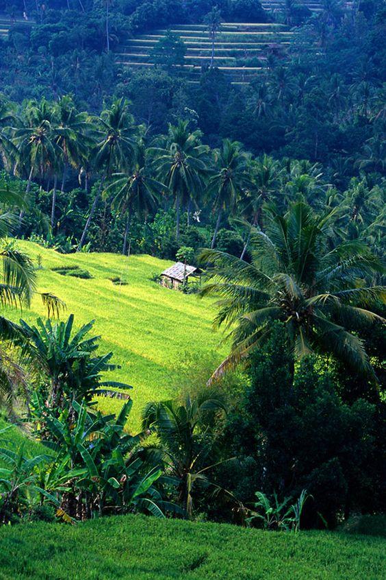 Bali.: