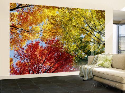 Arbres aux couleurs automnales, vus de dessous Reproduction murale (géante) sur…