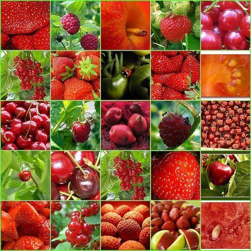 froitos vermellos