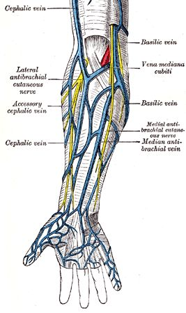 cephalic vein also known as – applecool, Cephalic vein