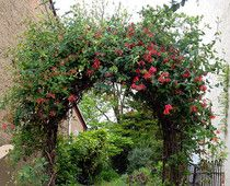 Garden trellises are both practical and beautiful.