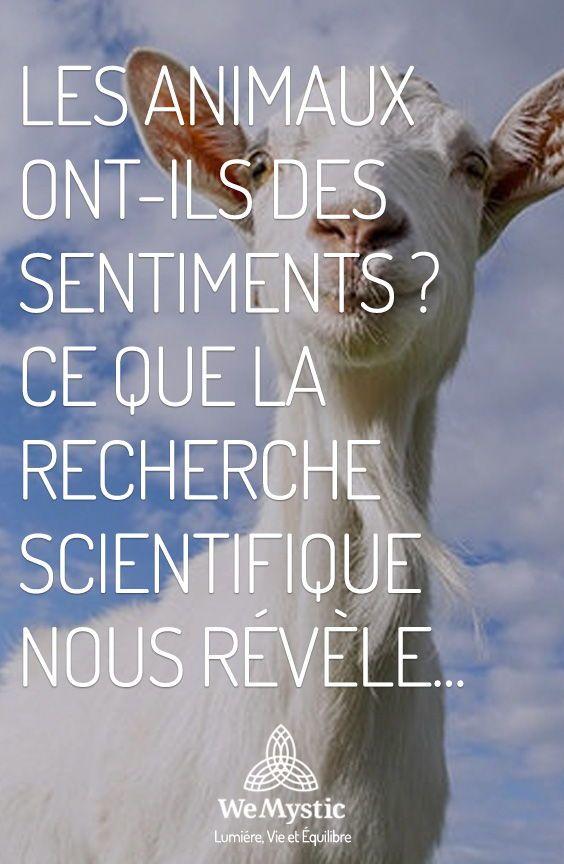 Les Animaux Ont Ils Des Sentiments Ce Que La Recherche Scientifique Nous Revele Wemystic France Les Sentiments Recherche Scientifique Sens De La Vie