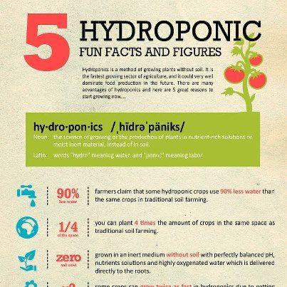 (31) Hydroponics