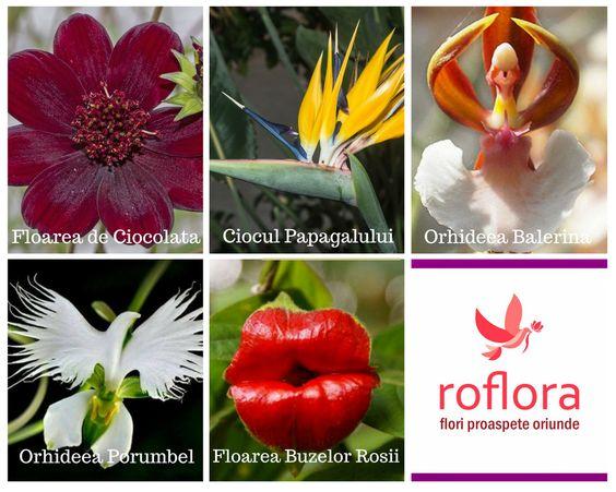 Flori neobisnuite
