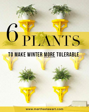 Indoor gardening indoor and plants on pinterest for Indoor gardening for seniors