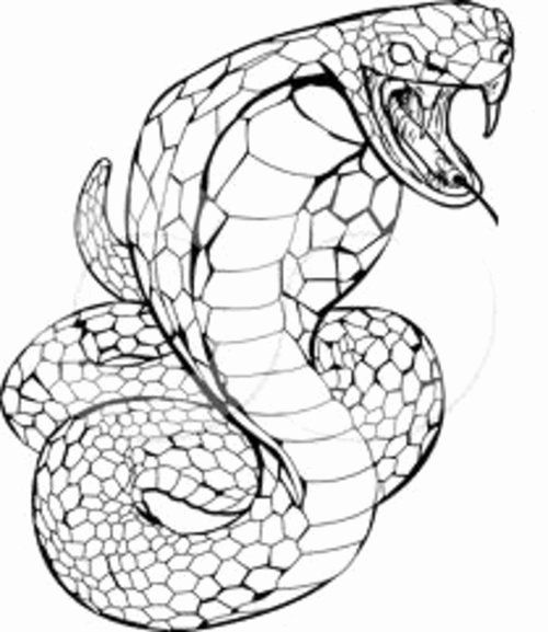 28 King Cobra Coloring Page In 2020 With Images Snake Coloring