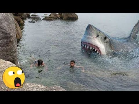 4 Scary Shark Attacks Caught On Camera Youtube In 2020 Sharks