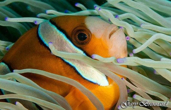 Taken on a dive in the Philippines  #underwaterphotography #underwater #underwaterworld #underwaterphoto #underwaterpics #underwaterpictures #underwaterpic #natureaddictsun #naturelovers #nature #natureaddict #uwphotography #uwphoto #loves_underwater #lovediving #aquagallery #scuba #scubadiving #coral #greatbarrierreef #ocean #coralreef #diving #water #watercolor #uw #naturephotography #sea #fish by garybrennand http://ift.tt/1UokkV2
