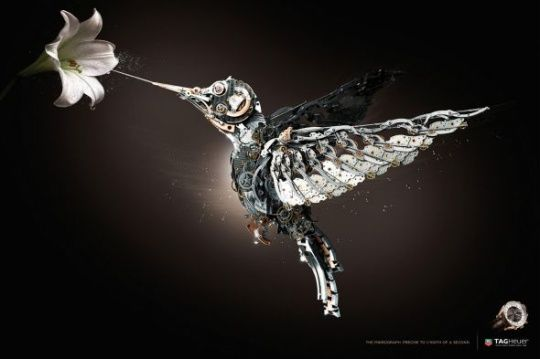 Tag Heuer: Bird by CLM BBDO    Animals in Print Ads