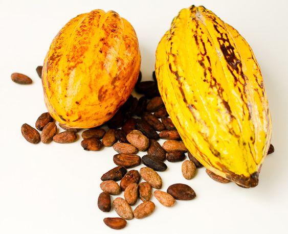 El origen y la historia del cacao y el chocolate. Vídeo