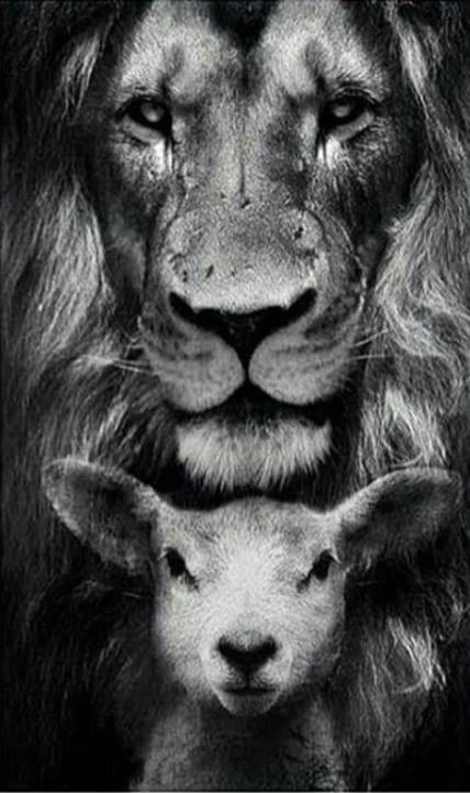 22 Super Ideas Wallpaper Preto E Branco Leao Jesus Art Lion And Lamb Jesus Wallpaper