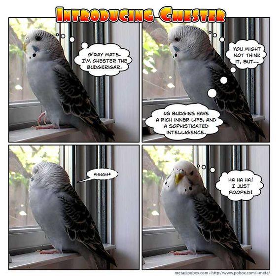 Cockatoo Sounds Like A Cat