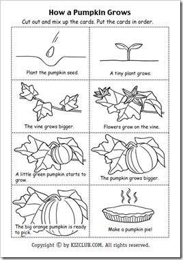 Yay! I found the cut and stapled copy of this the other day and wasn't sure how I was going to find the hard copy... thank you Pinterest! *Pumpkin Life Cycle: