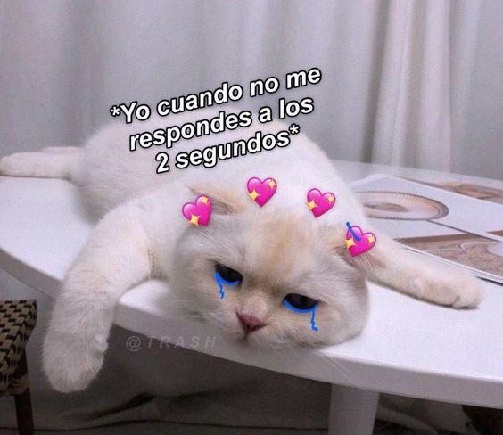 Pin En Memes De Gatos