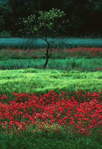 campi a Prezza by paraluci, via Flickr Poppy field , Italy