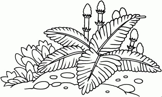 Malvorlagen Aquarium Pflanzen