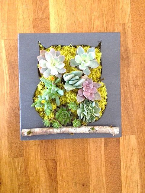 CUSTOM COLOR: Owl Succulent + Cacti Vertical Garden
