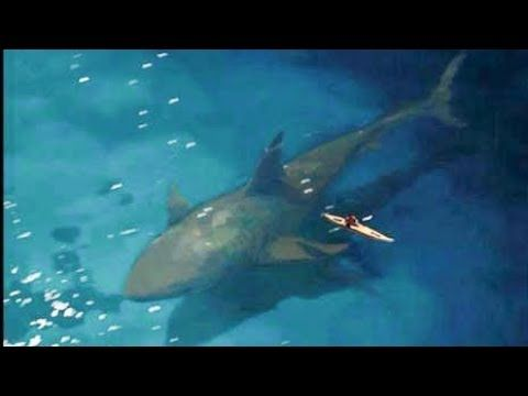 Megalodon Shark Caught on Camera 2018 - Two Newest Sighting